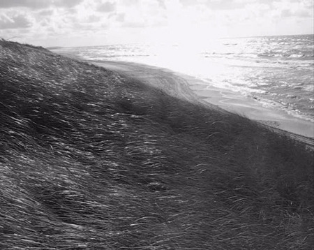 Alexander Nikiporets.
