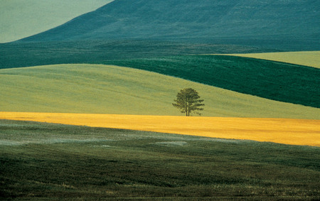 Franco Fontana.