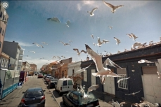 9-Eyes of Google Street View