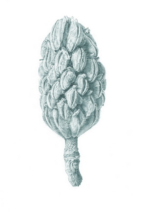Ekkehard Welkens.
