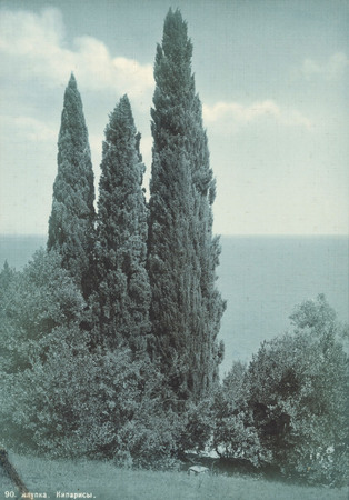 Vasily Sokornov.