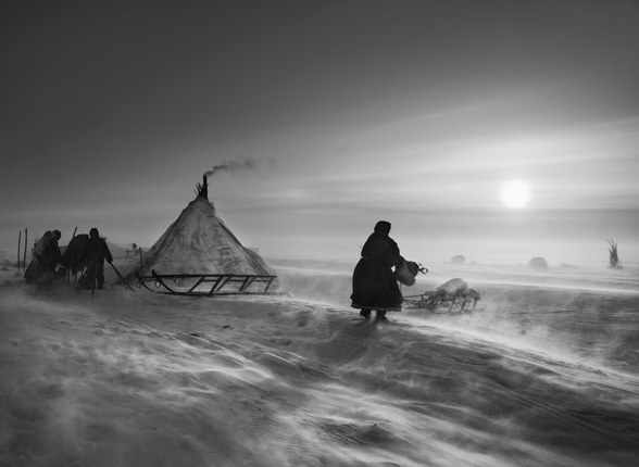 When the weather is particularly hostile, the Nenets and their reindeer may spend several days in the same place. 