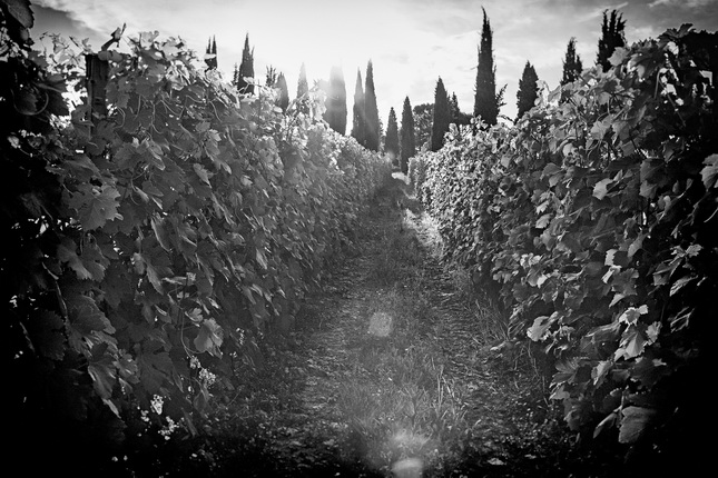 Mikhail Alekseev.