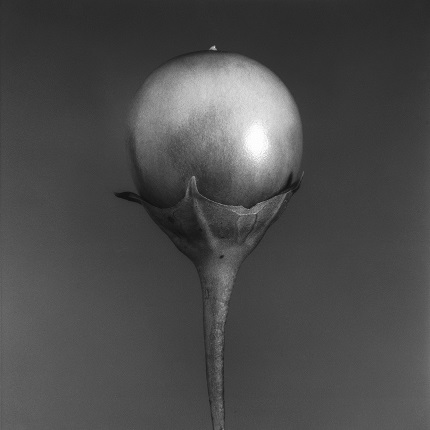 Jean-Baptiste Huynh.