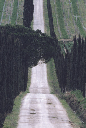 Vladimir Grevi.