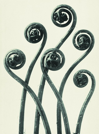 Karl Blossfeldt.